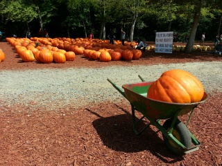 Nothing says fall like a pumpkin in a wheelbarrel
