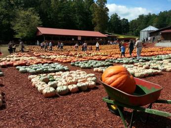 Look at this pumpkin heaven!