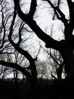 Fatman Trees!