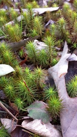 Nature flourishing
