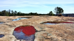 Vernal Pools and Diamorpha