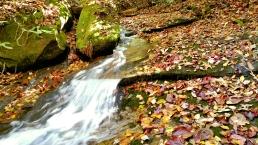 waterfall leaves